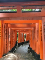 Thousands of Torii Gates line the path to the shrine