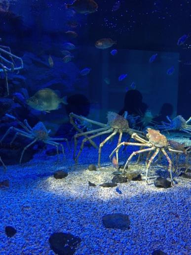 At the aquarium in Osaka