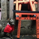 Foxes are the mascot of this shrine