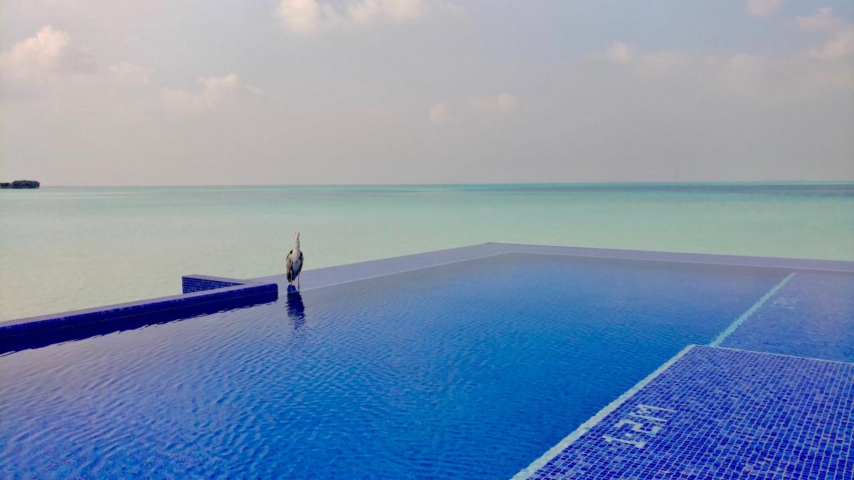 The Magnificent Maldives- Diamond Status IsImportant!