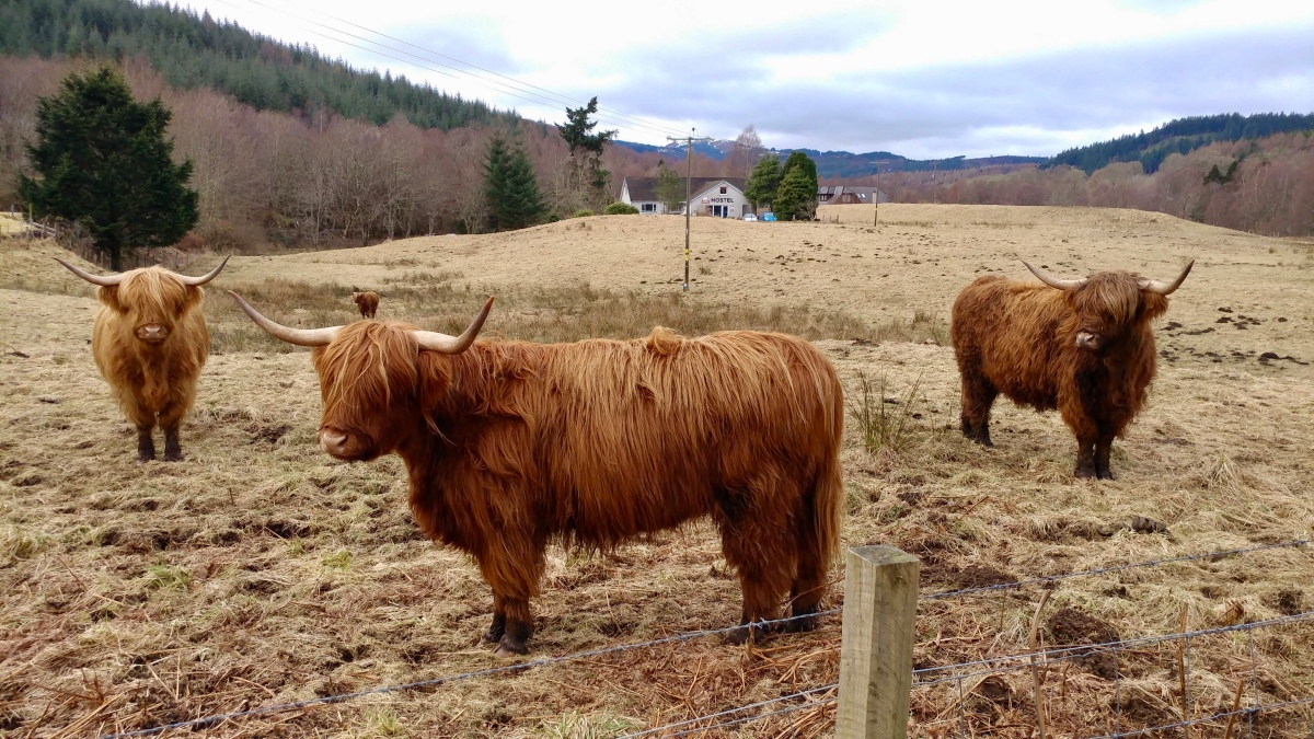 The Scotland Diaries: Part1